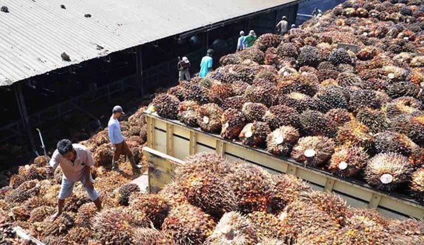 Indonesia Perkenalkan Komoditas Ekspor Unggulannya di Mesir
