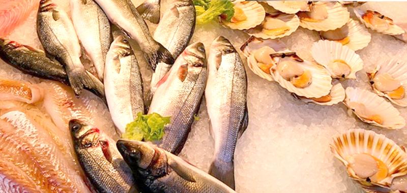 Selain Kualitas Ikan, Andro Marine Tawarkan Sistem Pembayaran Menarik
