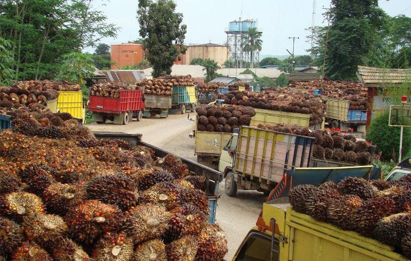 Peluang Ekspor Minyak Sawit Indonesia Makin Terbuka di Pakistan